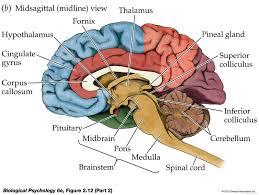 Brain Chart Full Brain Diagram Schematic Data Img