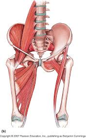 Ch 7 Muscular - Foothill Anatomy & Physiology