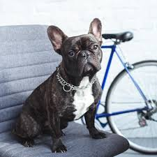 Many health insurance companies offer free health insurance quotes. Dog Insurance Figo Pet Insurance For Dogs And Puppies