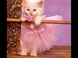 cat pic اجمل صور قطط