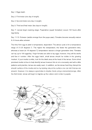 lab report drosophila melanogaster  4