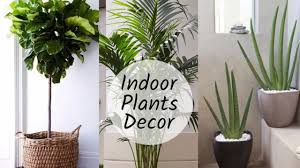 Good Home Decoration With Plants || Best Indoor Plants In India For Decoration