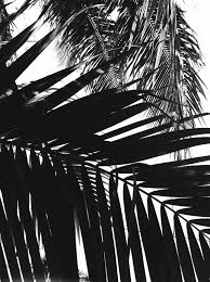 45 beautiful pictures of palm tree tumblr black and white palm trees tumblr black white t63 and