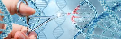 Genome Editing Genome Editing Talking To Patients Genomics Education Programme