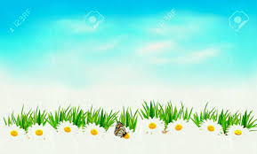 grass and sky backgrounds. Unique And Summer Grass With Chamomiles On Background Of The Sky Royalty Free For And Backgrounds K