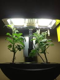 aerogarden weed harvest. indoor gardening - my aerogarden and houseplant blog weed harvest