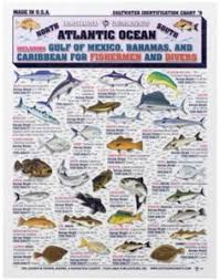 23 Meilleures Images Du Tableau Florida Fishes Types De