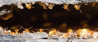 Image result for structural damage caused by termites