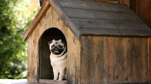 how to build a dog kennel