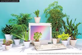 great office plants. Best Desk Plants: 12 For The Office Bloomberg Photo Details - These Ideas We Give Great Plants