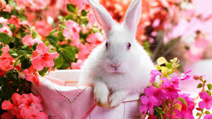 white rabbit wallpaper. Exellent White Cute Rabbit Wallpaper HD  Best Wallpapers With White A