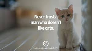 never trust a man who doesn t like cats