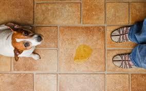 Ergebnisse für stockvideos inklusive, fußboden. Der Hund Pinkelt In Die Wohnung Ursachen Und Hilfe