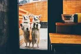 best dog flap automatic dog doors