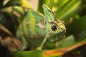 7 Animals That Are Better Color Changers Than Chameleons Mental