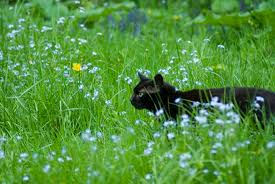 Image result for black cats in green grass