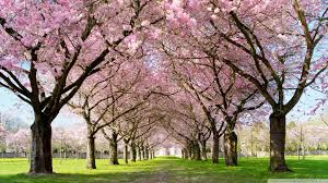 Most Beautiful Spring Wallpapers - Top ...