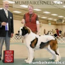 mumbai breeders private limited navi mumbai service provider of