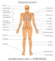 Chiropractic Body Chart Human Body Diagram Images Stock Photos Vectors Shutterstock