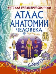 """Книга """"<b>Детский иллюстрированный</b> атлас анатомии человека ..."""