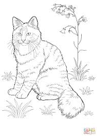Coloring Forest Animals Coloring Book Norwegian Cat Page