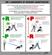 classical conditioning examples if you have any questions don t classical conditioning examples if you have any questions don t hesitate to contact me