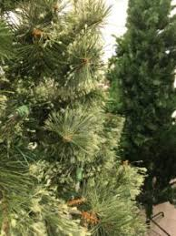 Find used artificial Christmas trees for sale at Goodwill | NCW