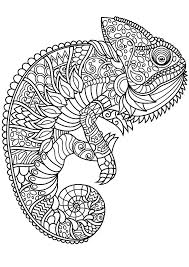 Coloring Pages Forest Animals Captivating Animal Coloring Pages Forest Animal Coloring Captivating