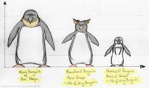 Methodical Penguin Size Chart 2019