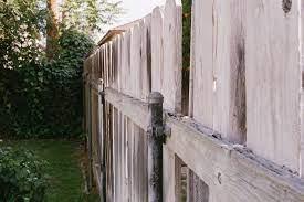 hiding an ugly backyard fence crewcut