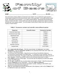 Bear Classification Chart Student Sheet For Bear Evolution Activity