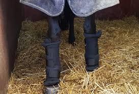 Back On Track Leg Quick Royal Wraps