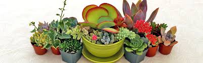 Small Picture Garden Design Garden Design with Succulent Plants on Pinterest