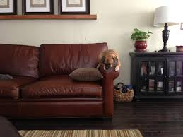 pet friendly furniture. Use Stainresistant Fabrics Pet Friendly Furniture T