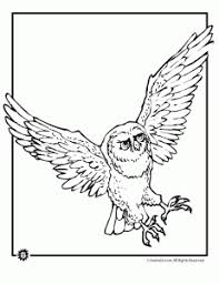 Small Picture Owl Coloring Pages Animal Jr