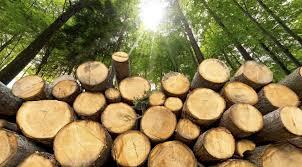 Logging Ban Hits Builders In Kenya Hard As Costs Skyrocket