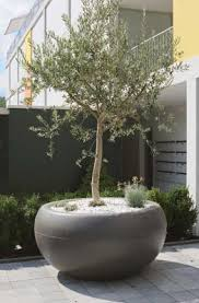 Aladin Extra Large Commericial Planter: Outdoor Pots for Trees