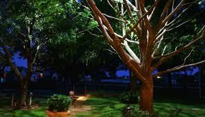 moonlighting tree lighting