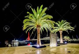 Palm Tree Night Light Palm Trees In The Night Lights In Marina Porto Montenegro Tivat