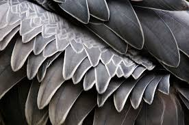 feather patterns feather patterns shoebill feathers more from my trip to t flickr