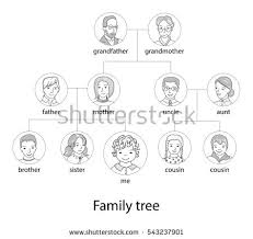 pedigree tree pedigree chart stock images royalty free images vectors