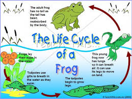 Life Cycle Adaptations Lessons Tes Teach