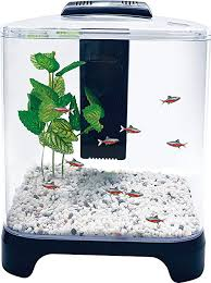betta fish tanks. Interesting Tanks Penn Plax Betta Fish Tank Aquarium Kit With LED Light And Internal Filter  Desktop Size In Tanks N