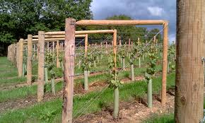 Amusing How To Build A Grape Arbor 39 For Your New Design Room with How To