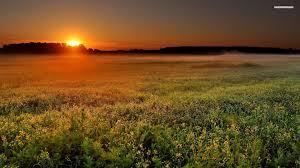 tall grass field sunset. Tall Grass Field Sunset G