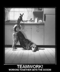 Teamwork Quotes Funny