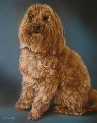 custom dog portrait oil painting reilly poodle pet portraits painted with love by jeanne illenye
