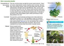 Venn Diagram Of Vascular And Nonvascular Plants Badge 3 Nonvascular Plants Diversity Of Living Things