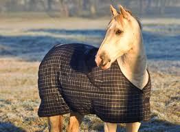 Horse Blanketing Faqs The Horse