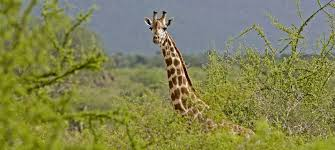 Tsavo East and West   Everything to know   Discover Africa Safaris